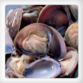 FROZEN BOILED MARSH CLAM MEAT